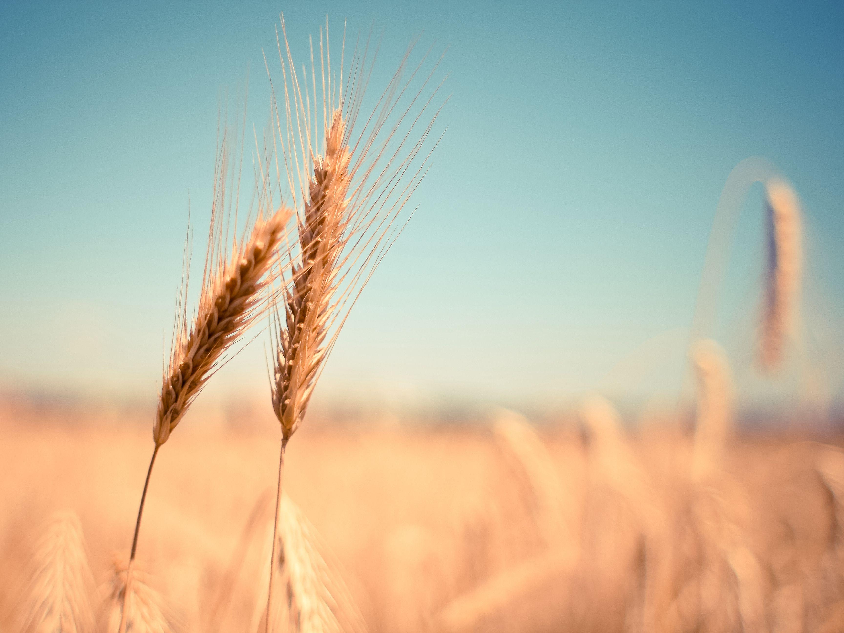 王益民:产业生态战略分析--以农业产业为例